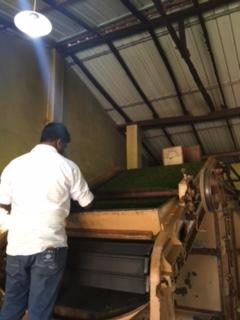 Sri Lanka Tea factory 1 fermenting