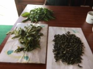 Sri Lanka Tea Newburgh stages