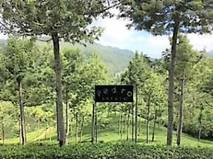 Sri Lanka Tea Pedro plantation