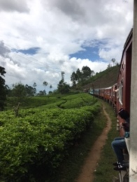 Sri Lanka train tea 3