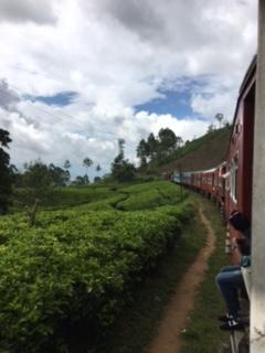 Sri Lanka train tea 3