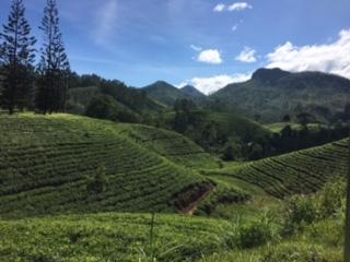 Sri Lanka train tea 4