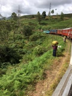 Sri Lanka train tea 7
